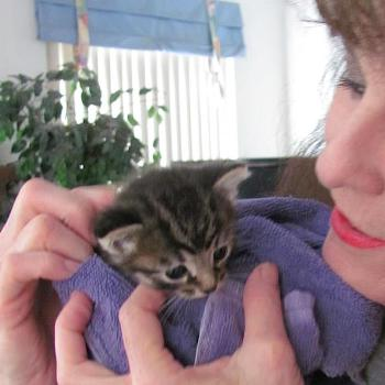 Tam with foundling tabby kitten