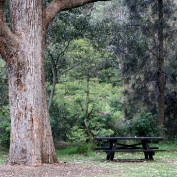 9688 picnic table, Lane Cove National Park, West Chatswood, NSW, 1st Sept'09, Kate/Sydney