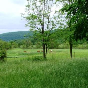 Pasture Land in Ozark Mountains of Arkansas by Wilodene of Utah