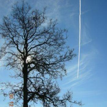 Tree and contrail - Keyan Bowes