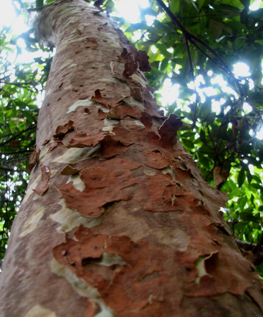 The meaning of bark