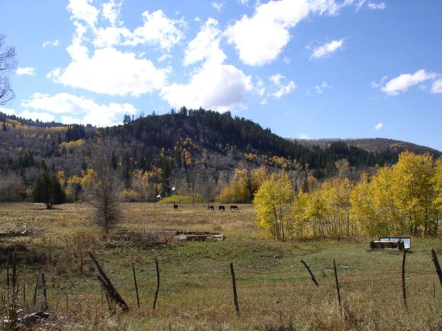 This ranch snuggled up next to the mountains was showing off its natural beauty in the fall as we took a country road home.  The quaking aspen trees are gold with fall foliage here, but are mysteriously dying in the West.  It wouldn't be autumn here without their gold leaves; I hope they can stop their demise.